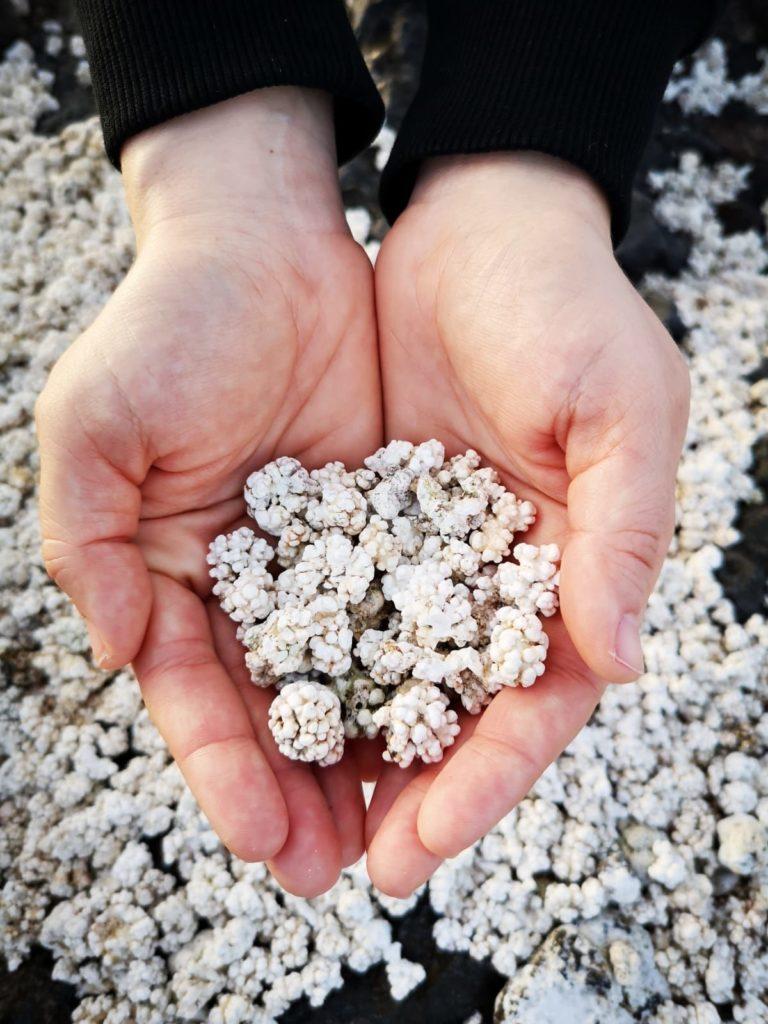 Popcorn Fuerteventura